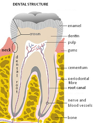 Dental-structure